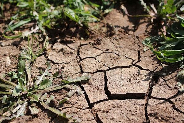 Trockenschäden im Gründland machen sorgfältige Planung notwendig