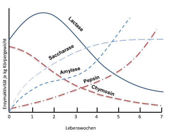JOSERA Grafik zeigt die Entwicklung der Enzymaktivität im Verdauungstrakt des Kalbes mit zunehmendem Alter