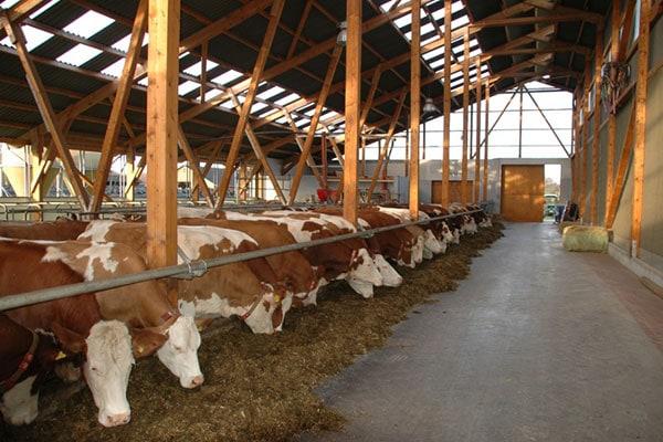 Beleuchtung - Jetzt geht Ihren Kühen ein Licht auf!