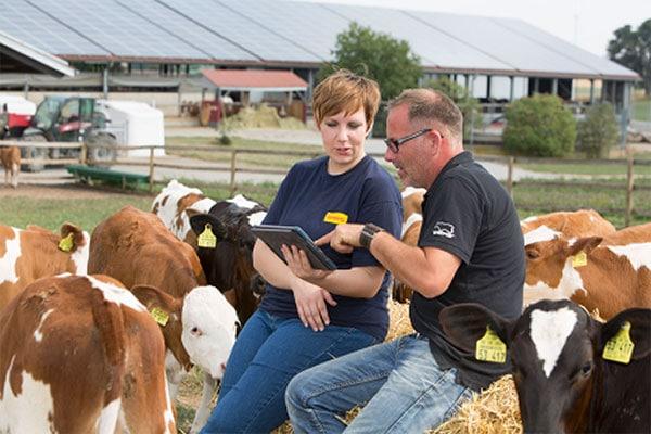 JOSERA Kälber auf der Weide mit Landwirt und Beratung