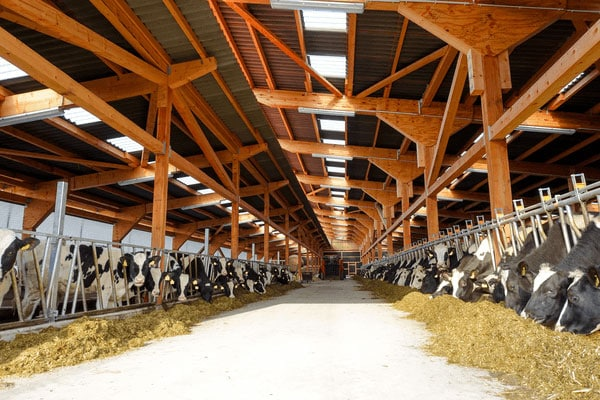 JOSERA Rinder im Stall, Blick von draußen