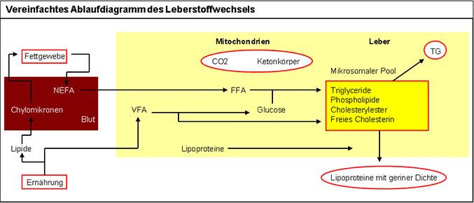JOSERA Grafik zeigt ein vereinfachtes Ablaufdiagramm des Leberstoffwechsels