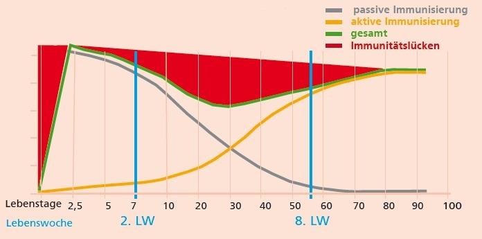 JOSERA Grafik zeigt Immunitätslücken der Kälber in Abhängigkeit zum Alter in Lebenstagen und Lebenswochen