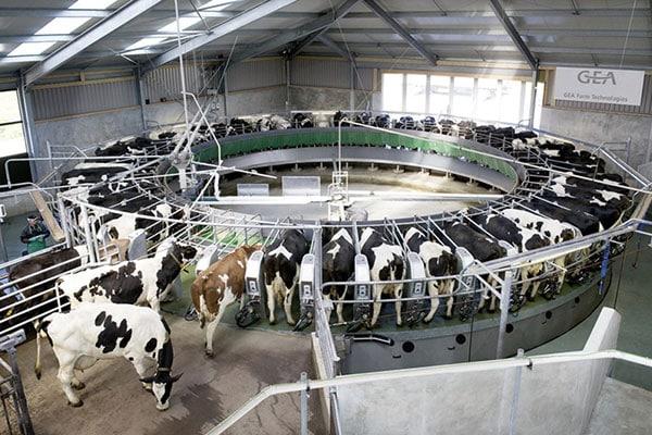 Einfluss von Toxinen und Fehlgärungen auf die Eutergesundheit