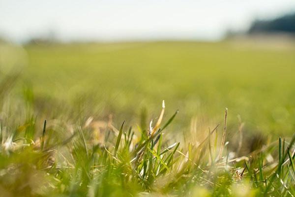 Der Weg zu einer optimalen Grassilage