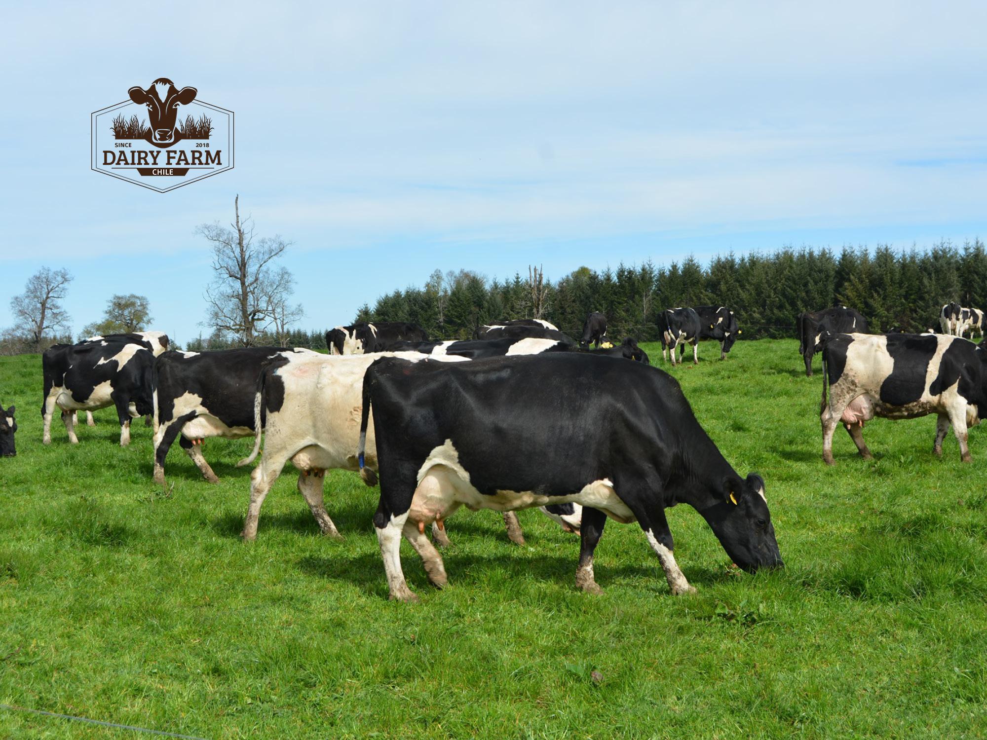JOSERA DairySafe – Gegen Metritis nach der Abkalbung