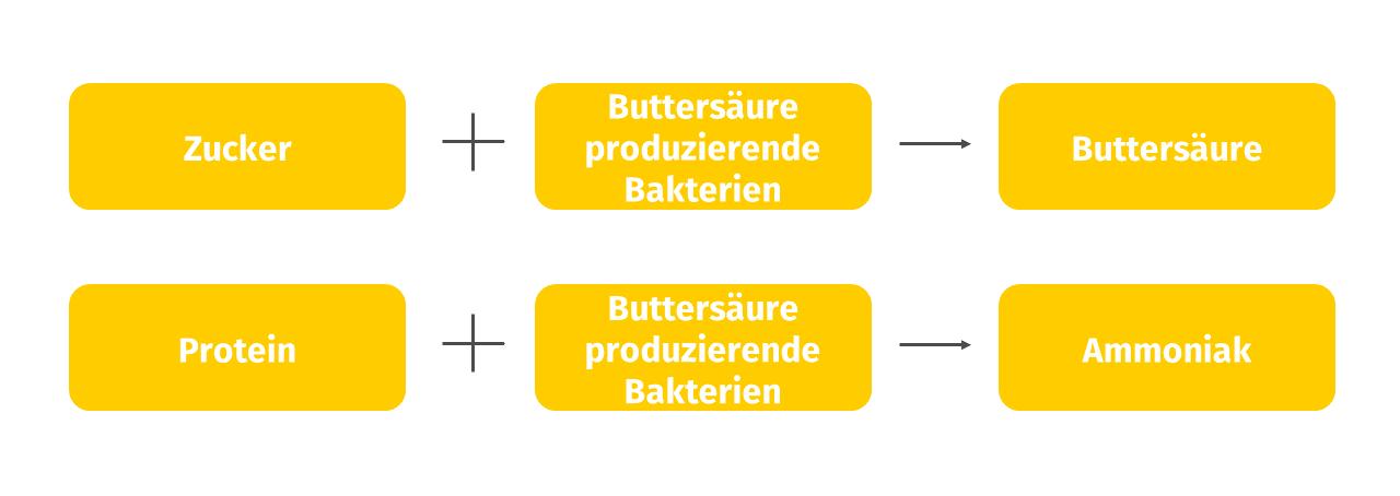 Josera, Gründe für die Bildung von Buttersäure
