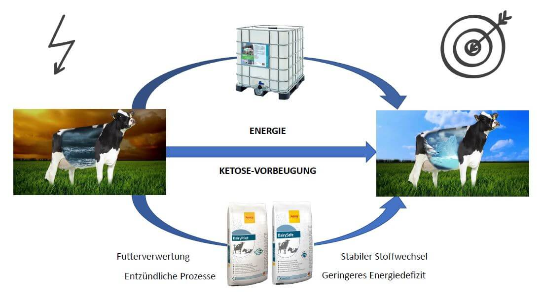 Schaubild zur Wirkung von JOSERA DairySafe und DairyPilot im Vergleich zu Propylenglykol