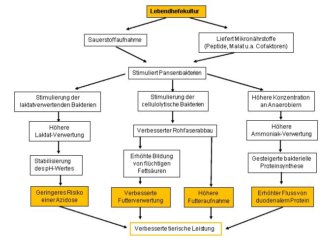 JOSERA Grafik Lebendhefe
