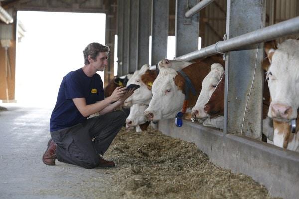 Milchviehhaltung und Antibiotika - wo kann die Tierernährung helfen?