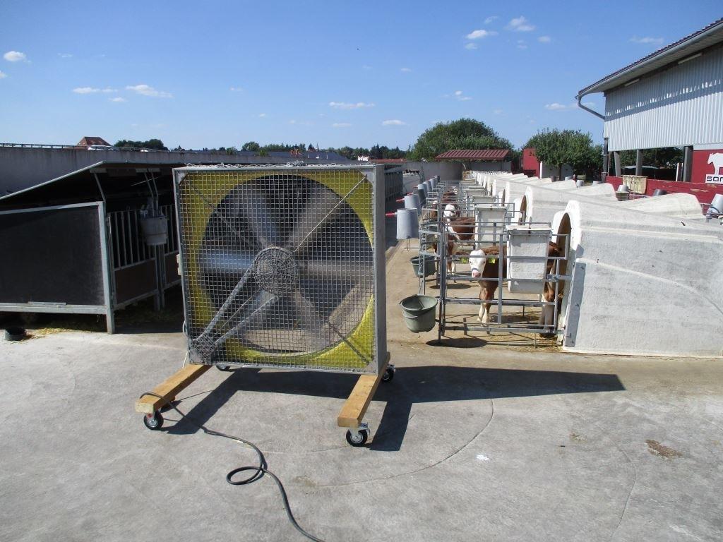 großer Ventilator steht vor einer Gasse mit Kälberiglus im Sommer